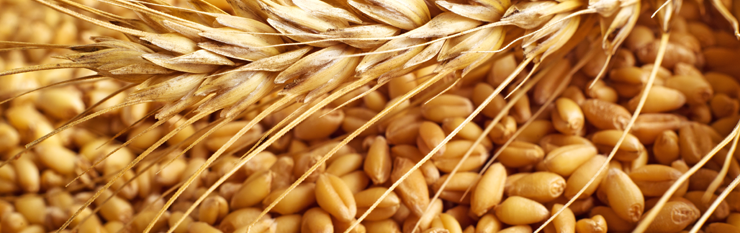 Kamut: An Ancient Grain With Many Health Benefits