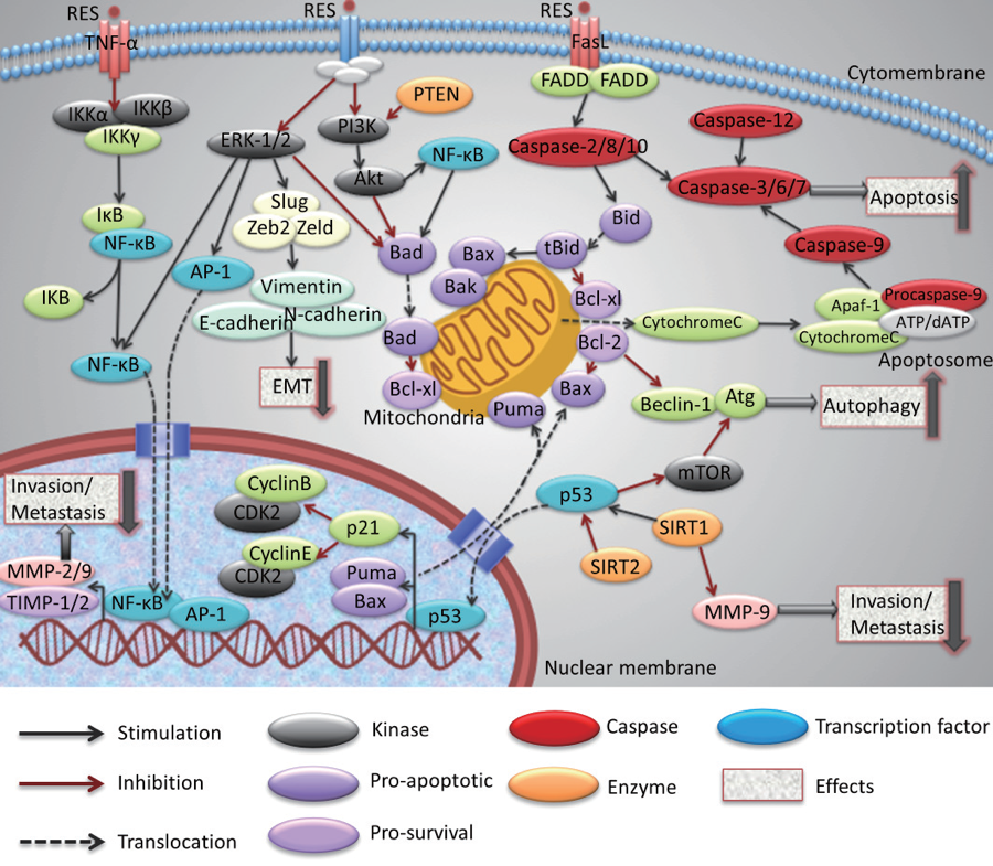 Guohua Han, et. al., Drug Discoveries & Therapeutics. 2015; 9(1):1-12.