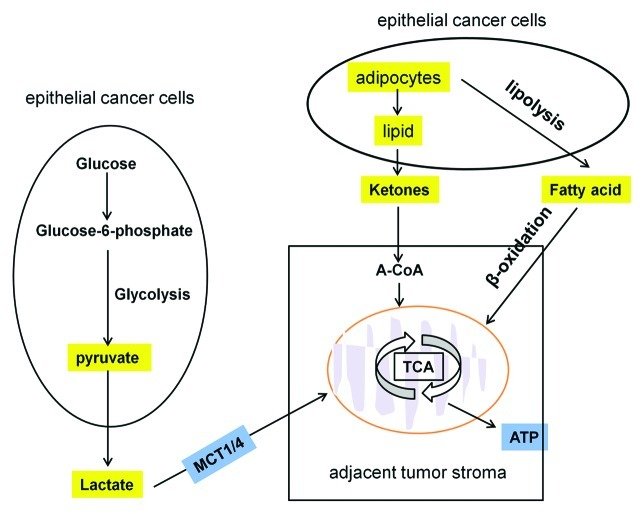 Altered Energy Metabolism in Cancer