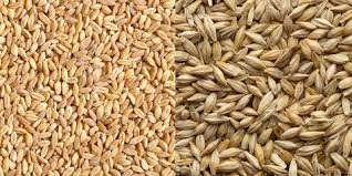 WHOLE GRAINS, WHOLE PLANET: SUSTAIN...