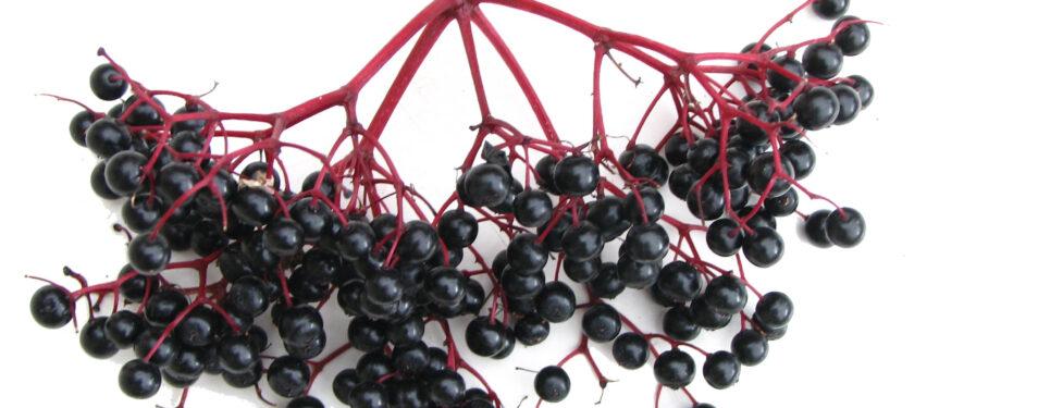 The Truth about Elderberry (Sambucu...